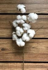 Tri W Imports Cotton Sprig