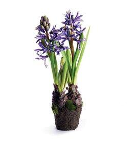 "Hyacinth 13"" Blue/Violet"