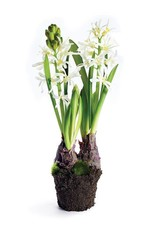 "Hyacinth Drop-In 13"" White"