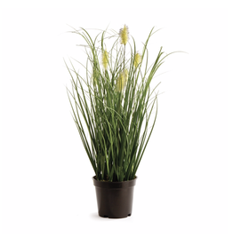 "Napa Home Garden Wild Grass 16"" Potted"