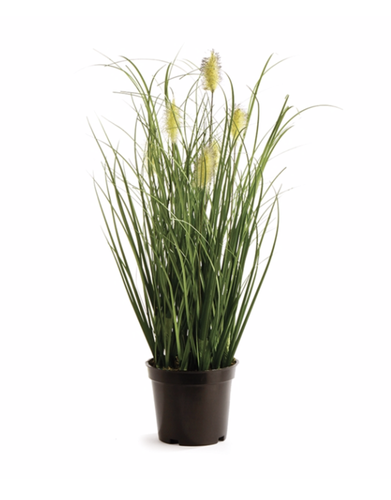 "Napa Home Garden Wild Grass 16"" Potted"