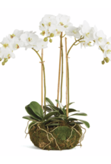"Phalaenopsis 16"" Mini Garden Drop-in"