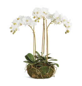 "Phalaenopsis 16"" Mini Garden Drop-in"