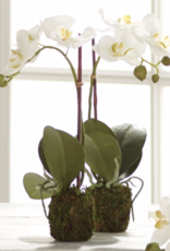 "15"" Phalaenopsis Drop-in"