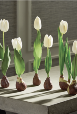 "Standing Tulips w/ Bulbs 12 1/2"" Cream"