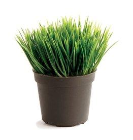 "Mini Potted Grass Plant - 3.5"""