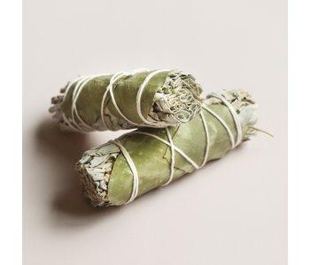 Eucalyptus Sage