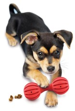 PETSAFE Busy Buddy Waggle for Puppies