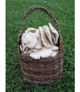 Wild Edible Mushrooms of Manitoba Workshop with Laura Reeves - March 21