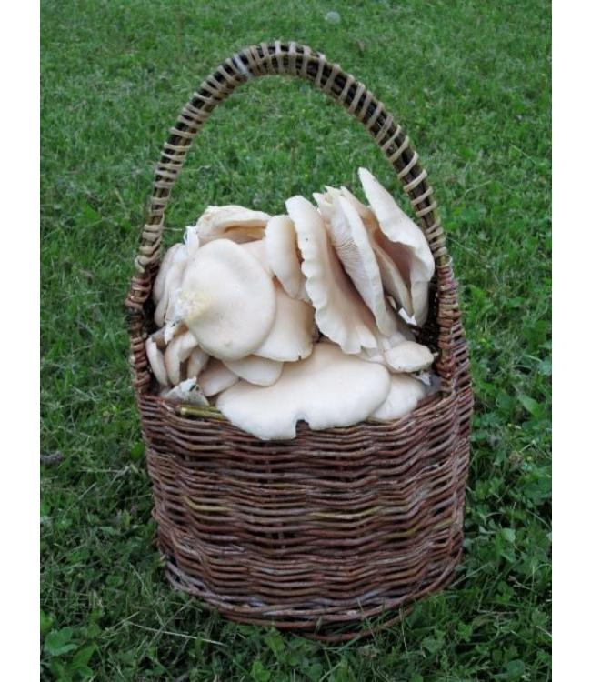 Wild Edible Mushrooms of Manitoba Workshop with Laura Reeves - April 10