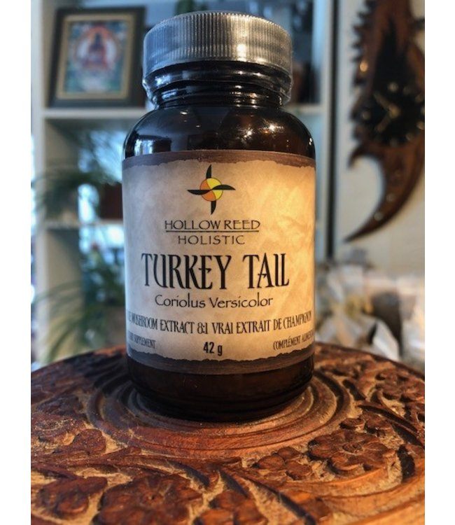 Turkey Tail Mushroom Extract, powder 42g