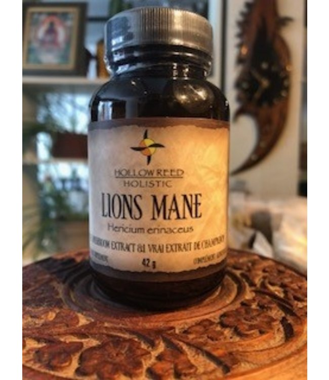 Lion's Mane Mushroom Extract, powder 42g
