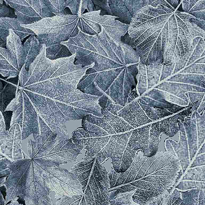 Timeless Treasures Winter Birch Large Leaves- ICE-C7831 Blue