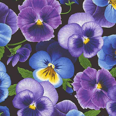 Timeless Treasures Midium Pansies- PANSY-C7720 Black