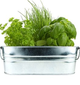 Buzzy Seeds Kitchen Herb Galvanized Windowsill