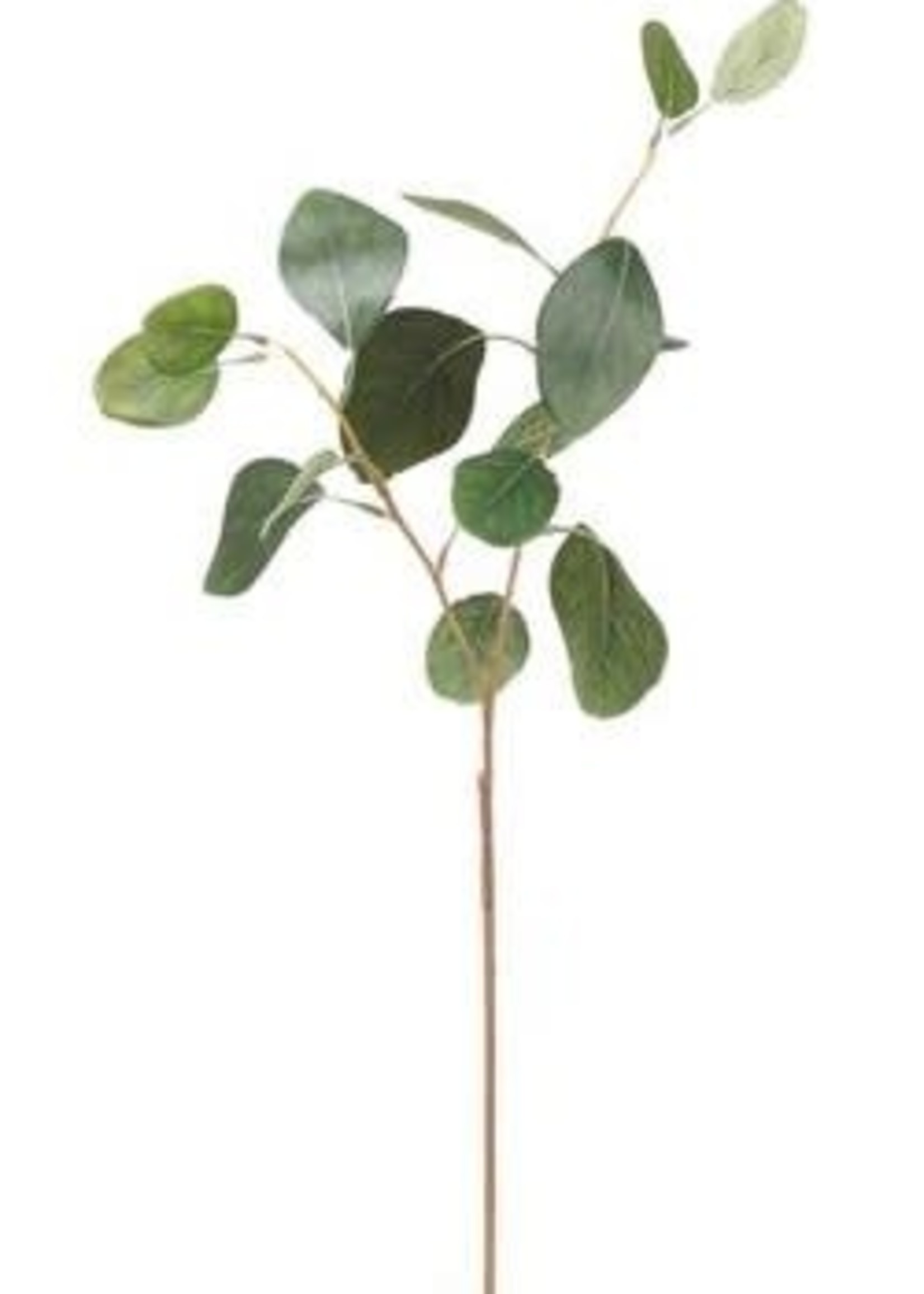 Allstate Eucalyptus Leaf Spray