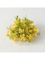Sullivans Yellow Wispy Bush