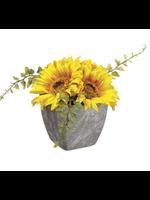 """Allstate Sunflower in Pot 4.25"""""""