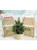 Buzzy Seeds Holiday Gingerbread Box Grow Kit