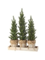 Regency International Large Triple Potted Pine Seedling Tray