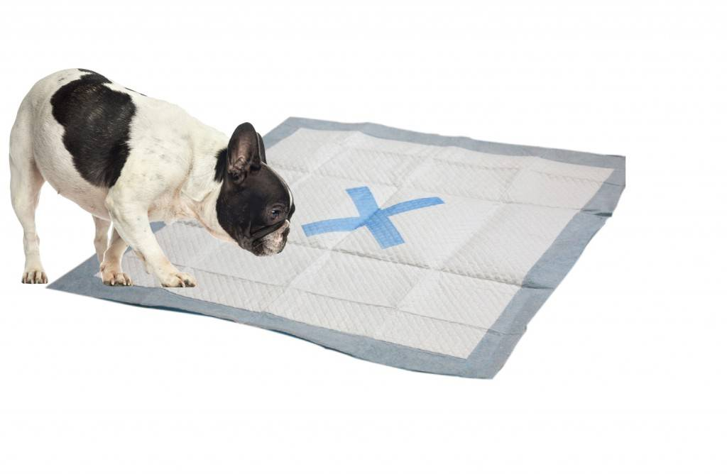 Ethical Pet Products Ethical Pet Products X Marks The Spot Training Pad 100ct