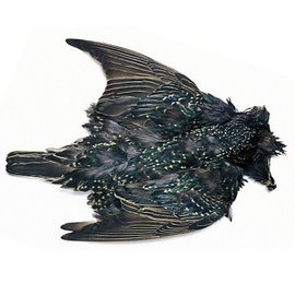 Nature's Spirit Starling