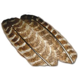TURKEY WING QUILL MOTTLED.OAK #1