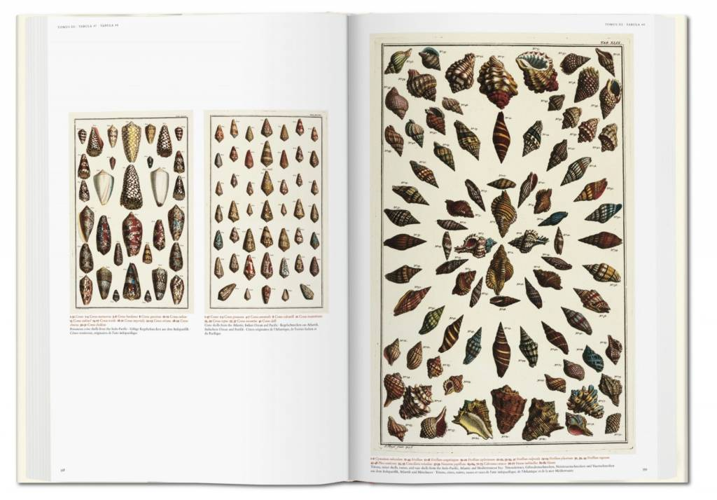 Albertus Seba Cabinet Of Natural