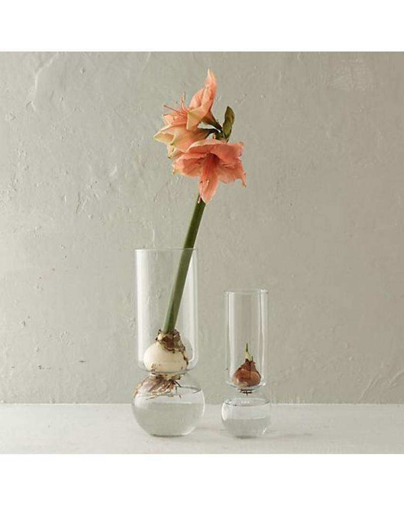 Extra Tall Clear Bulb Vase