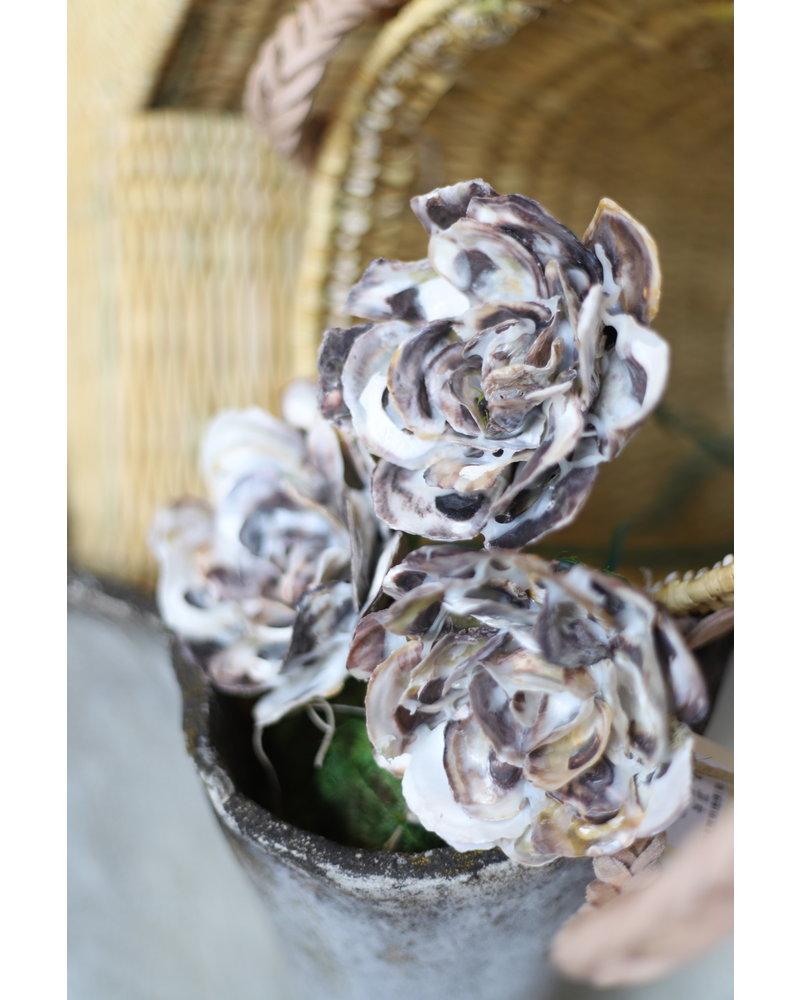 Oyster Shell Flower
