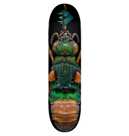 POWELL POWELL PERALTA - FLIGHT - RUBY TAILED WASP - 8.5