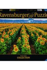 Fields of Gold 1000pc