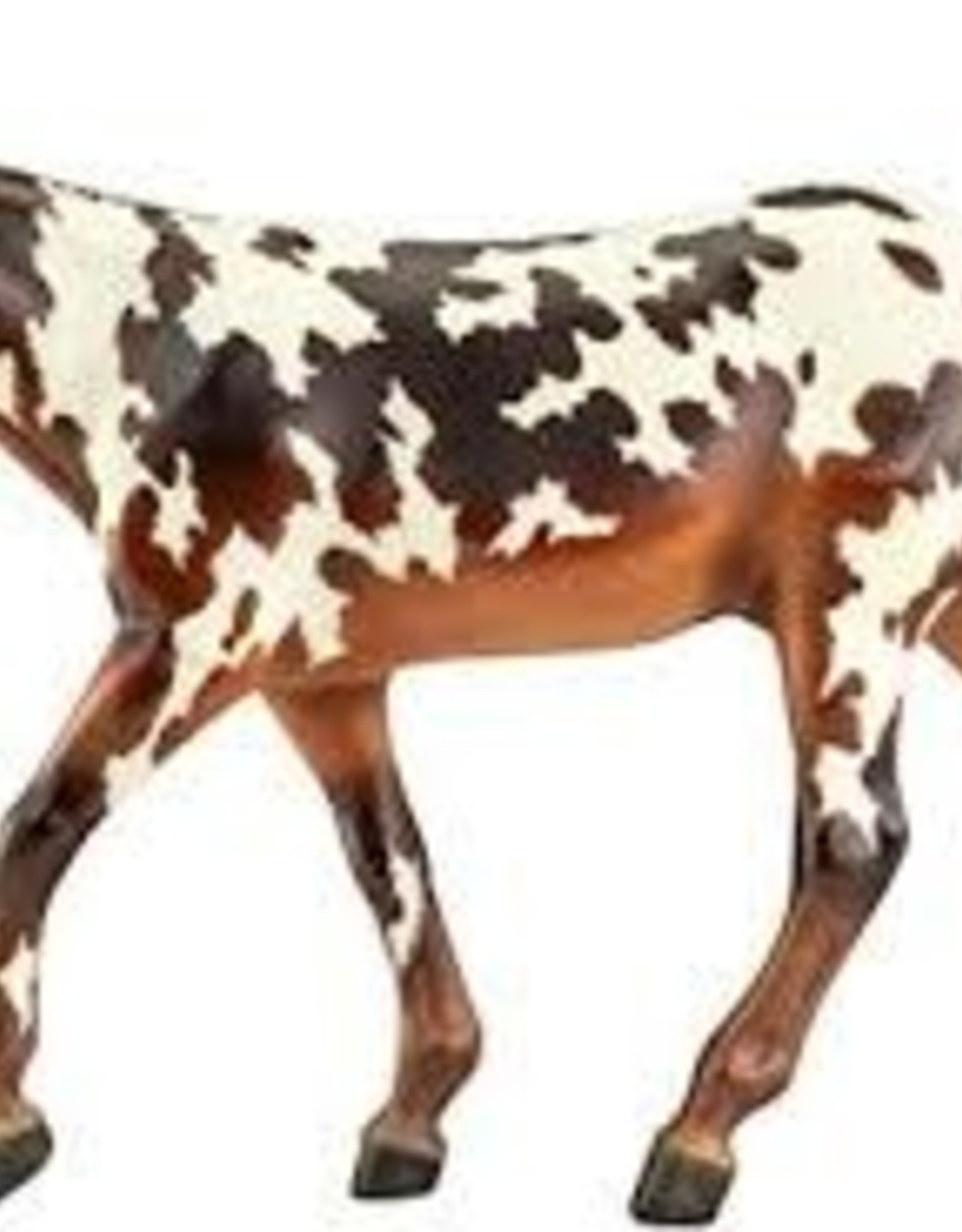 Buckeye- Dressage Mule