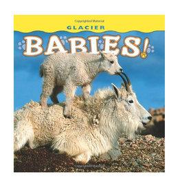 Glacier Babies - Board Book