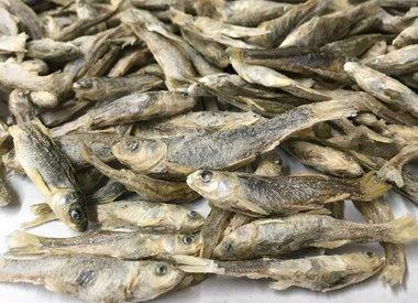 Freeze-Dried Treats