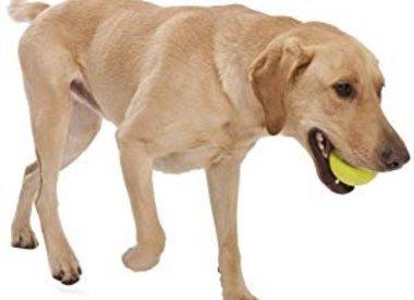 Fetch Toys