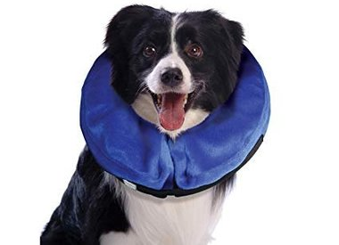 Recovery Cones & Collars