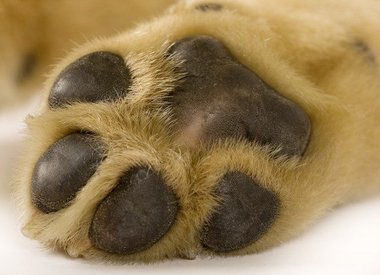 Paw & Nail Care