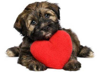 Heart & Liver Care