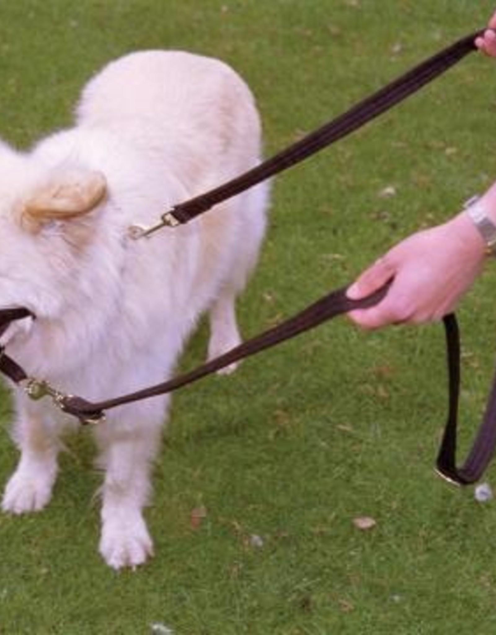Company of Animals Halti Training Lead