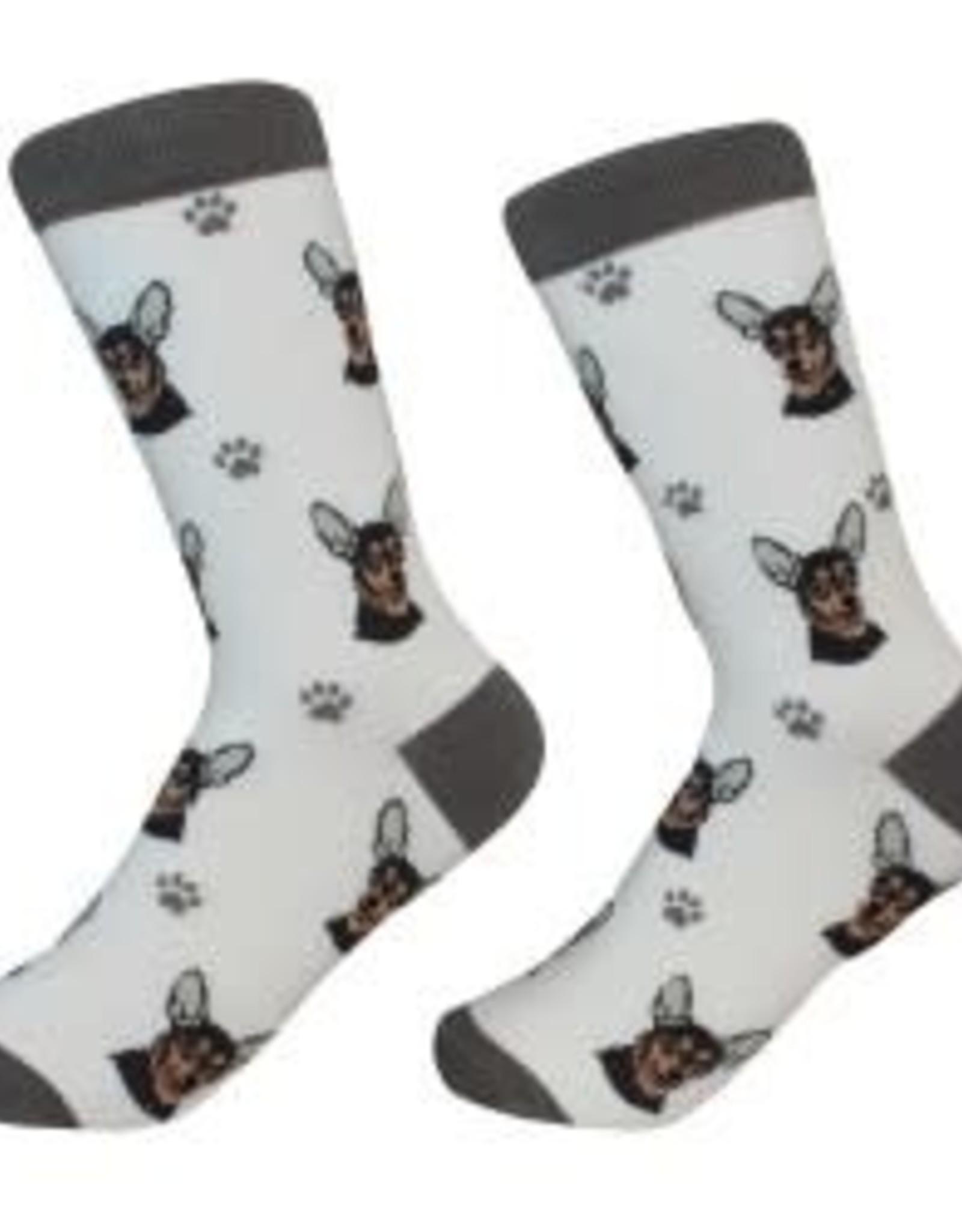 Chihuahua, Black Socks