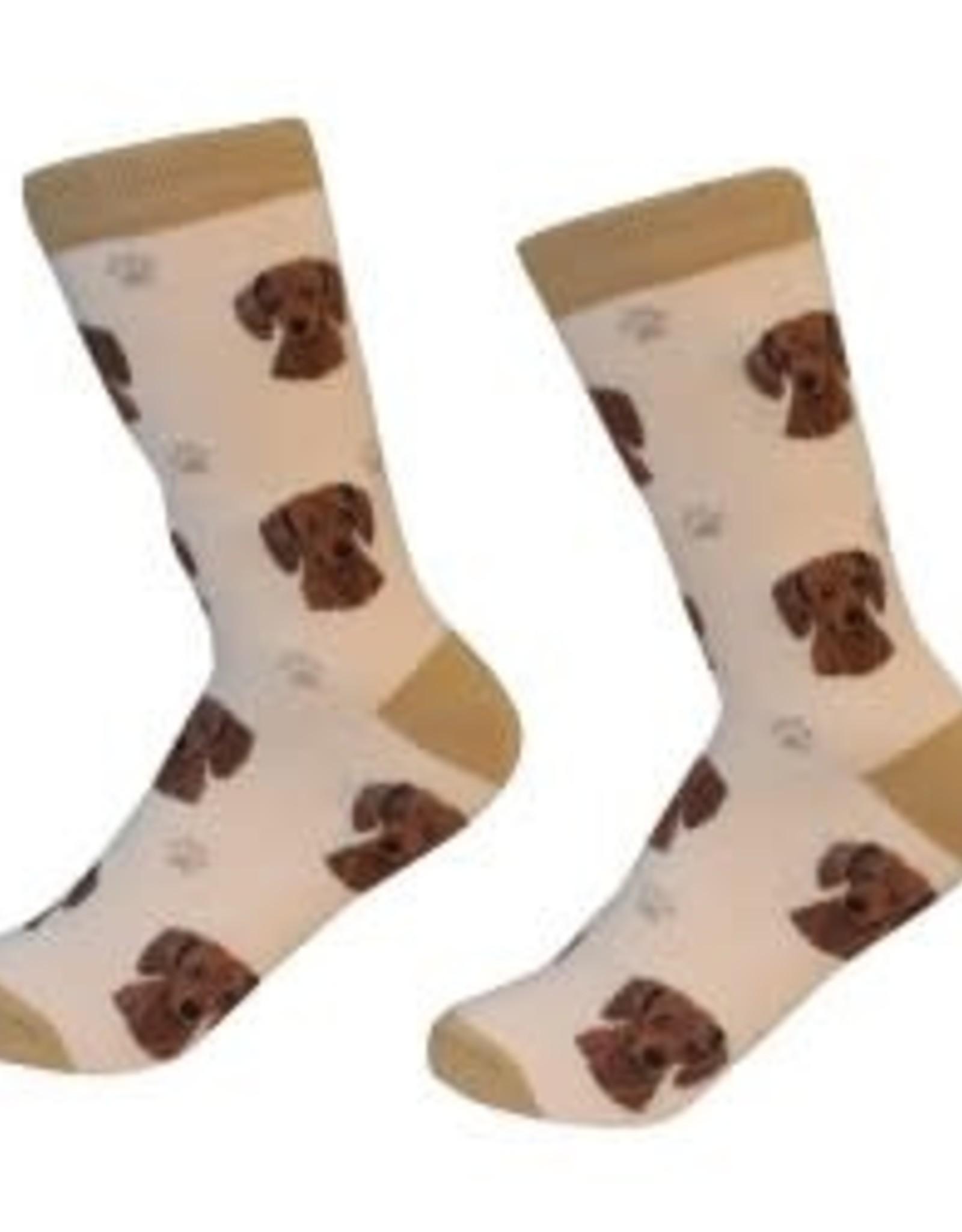 Dachshund, Red Socks