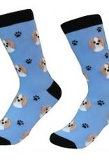 Cavalier King Charles Spaniel, Blenheim Socks