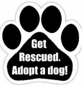 Car Magnet: Get Rescued, Adopt a Dog