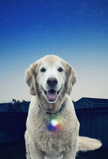 NiteIze NiteIze SpotLit LED Collar Light - Disco