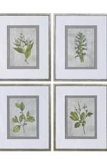 Stem Study Framed Prints S/4