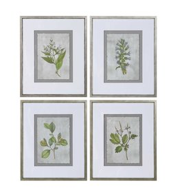 Stem Study Framed Prints S/4