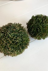 Sedum Orbs (Set of 8)