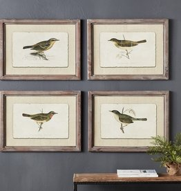 Framed Bird Prints (Set of 4)