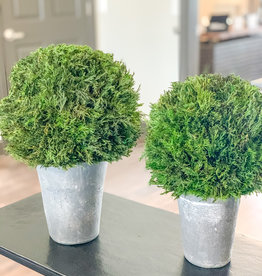 Cypress Globes, - Set of 2